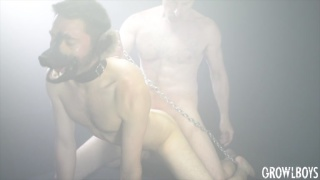 guy wearing a puppy mask & leash gets fucked